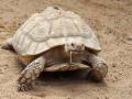 17_Schildkröte