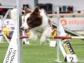 Hundesport1
