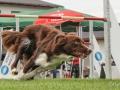 Hundesport11