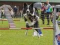 Hundesport13
