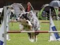 Hundesport14