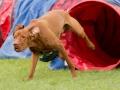 Hundesport15