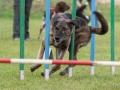 Hundesport16