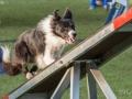 Hundesport18