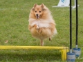 Hundesport19