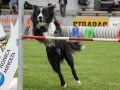 Hundesport2
