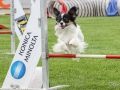 Hundesport3