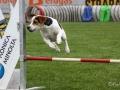 Hundesport4