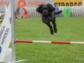 Hundesport6
