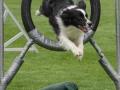 Hundesport7
