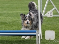 Hundesport8