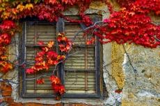 Kimberger_Herbst15