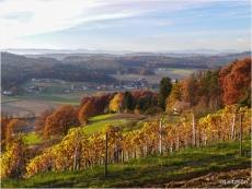 Leitzenberger_Herbst15