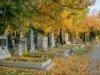 Schumm_Herbst15