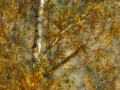Hinterleitner_Herbst 1-1
