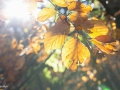 Hyros_Herbst15