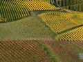 Weinlaub1201