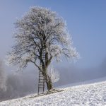 Baum am Damberg